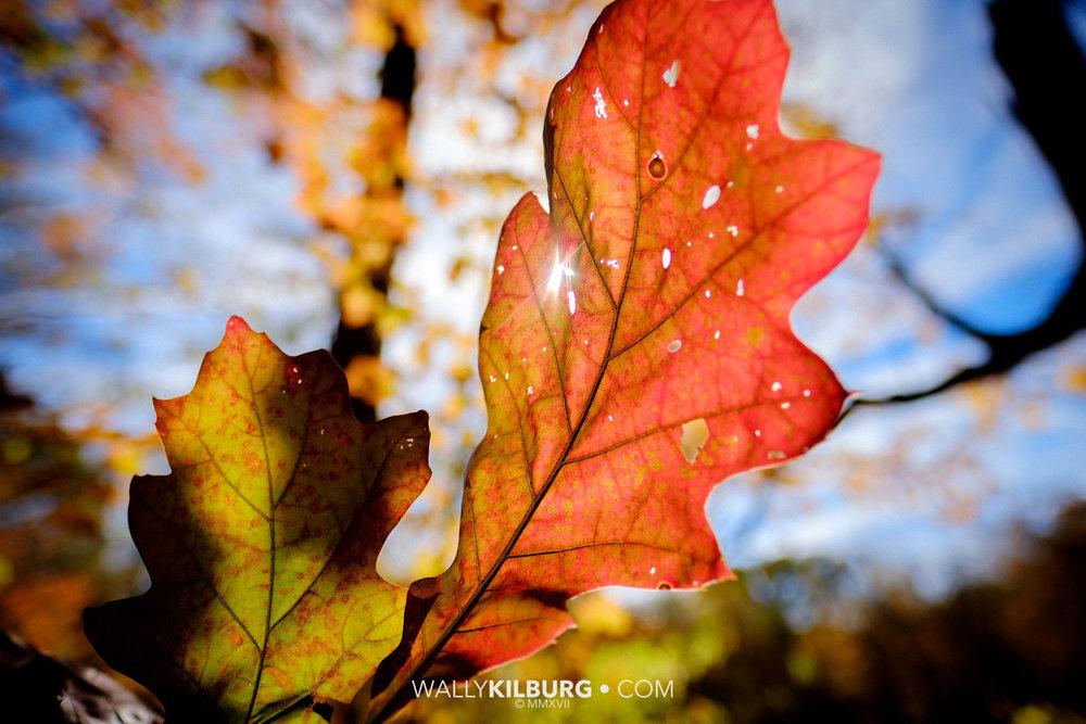 Fall at Harris Woods_15625.jpg