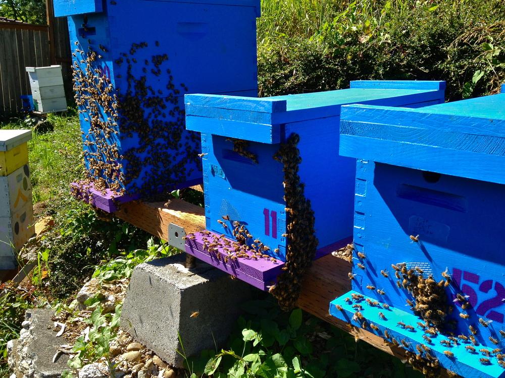 Bridgetown bees nucs