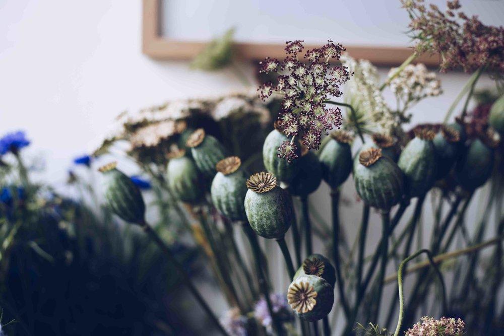 Botany wild flowers69.jpg