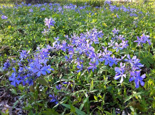 WildflowersW.jpg