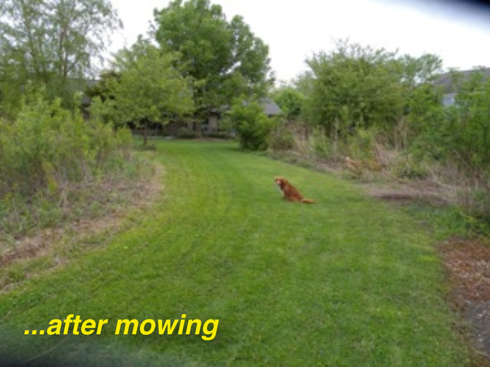 AfterMowing.jpg