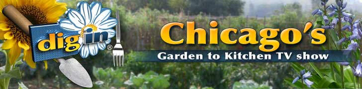 Dig-In-Chicago-Header-Banner-flattened1.jpg