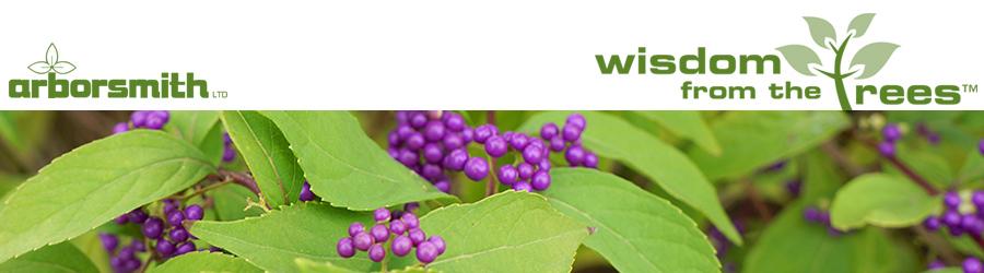 Wisdom-Website-Header-march2015.jpg