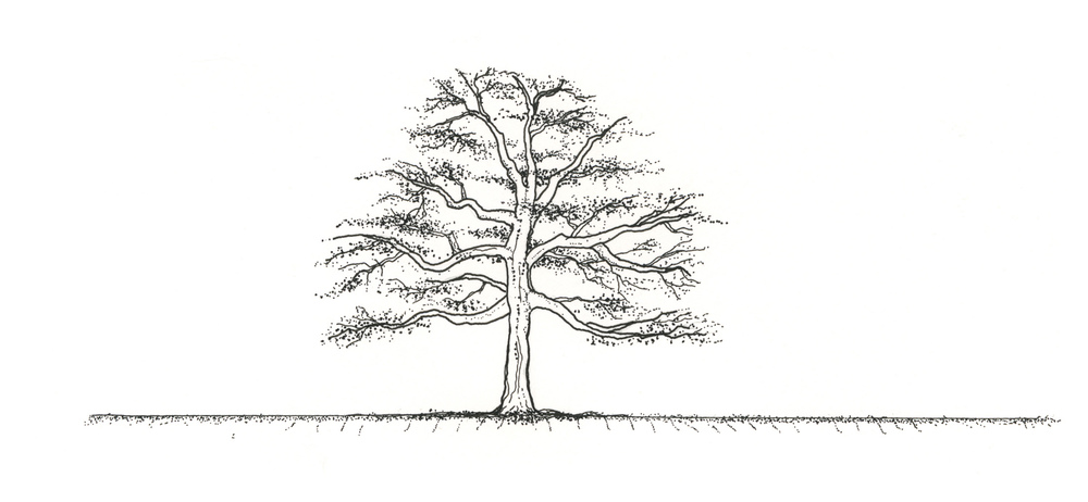TreeWithRoots.jpg