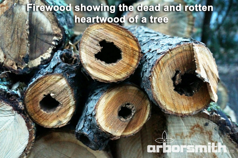 Tree-Growth-Rings-arborsmith.jpg