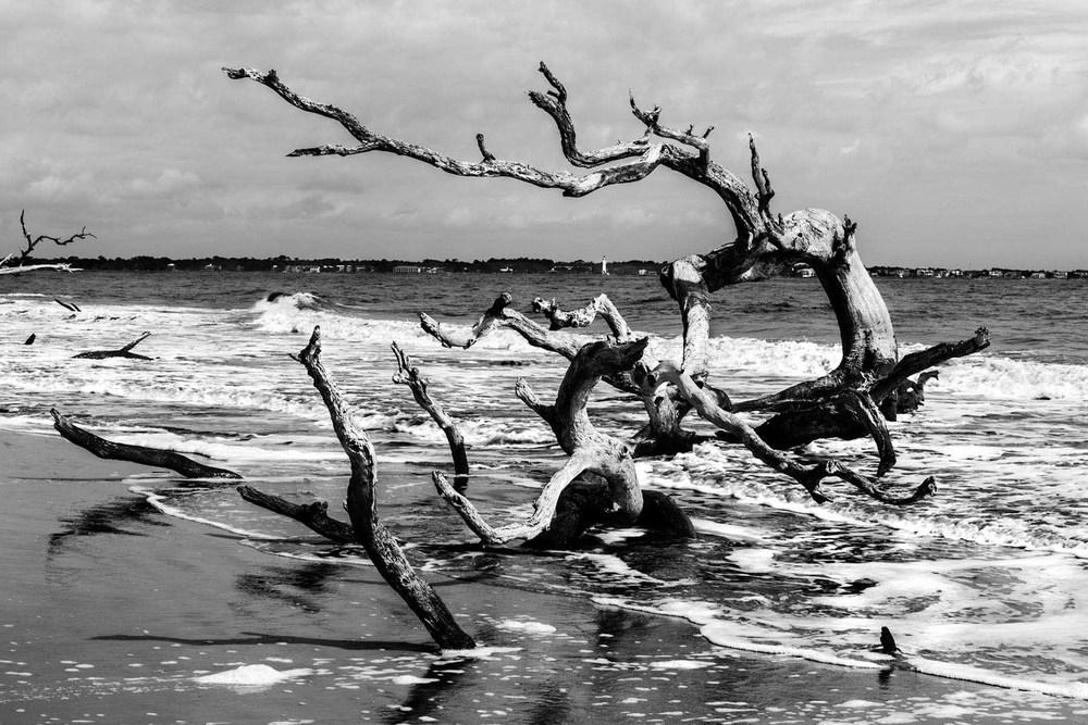 Jeckyll Island GA beach driftwood Tim Barnwell photographer