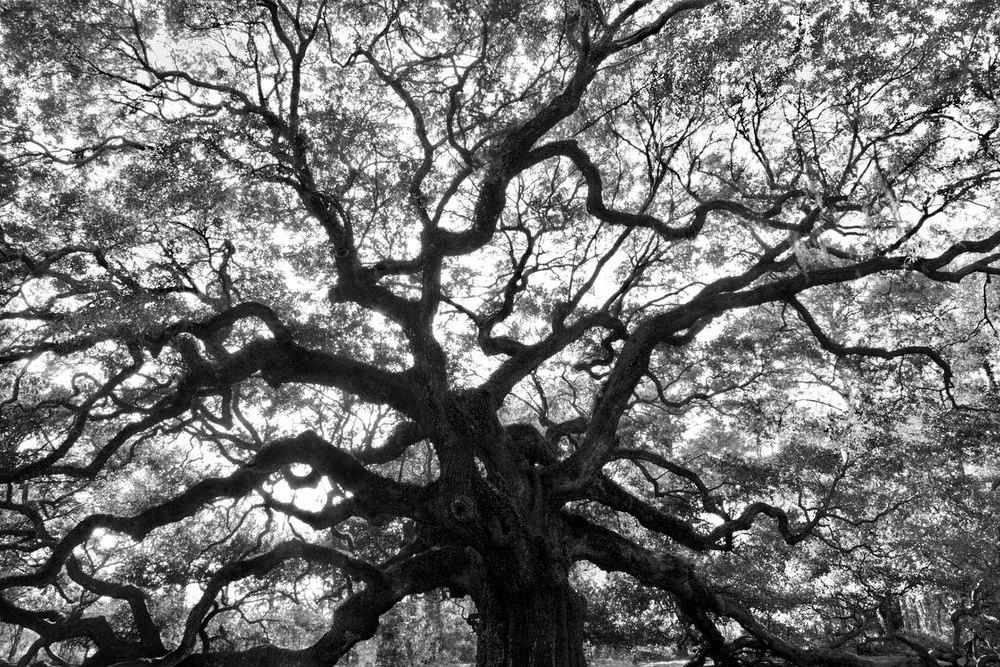 Angel Oak Charleston SC Tim Barnwell photography live oak Spanish moss