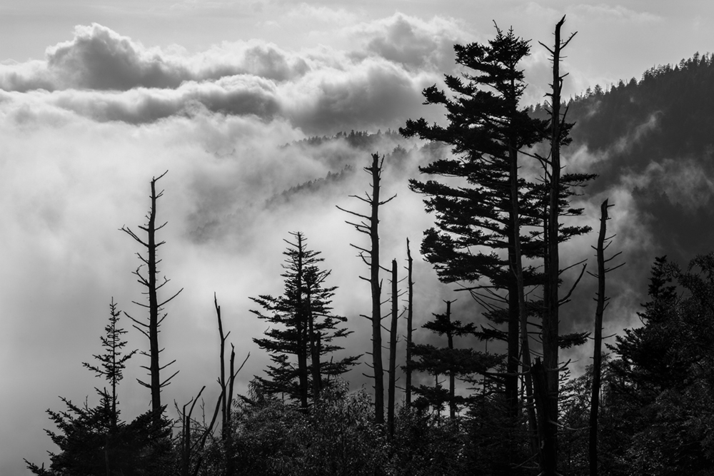 Clingmans Dome Great Smoky  Mountains National Park fog clouds mountains