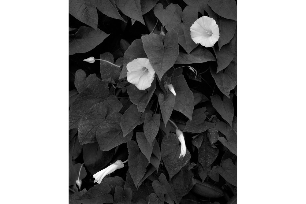 April 2011 POM Flowers & Leaves 4x6.jpg