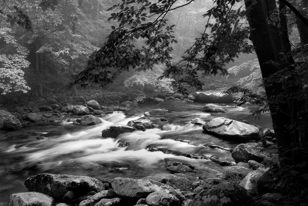 June 2011 POM Big Creek Smokies Barnwell_2029-digital 4x6.jpg
