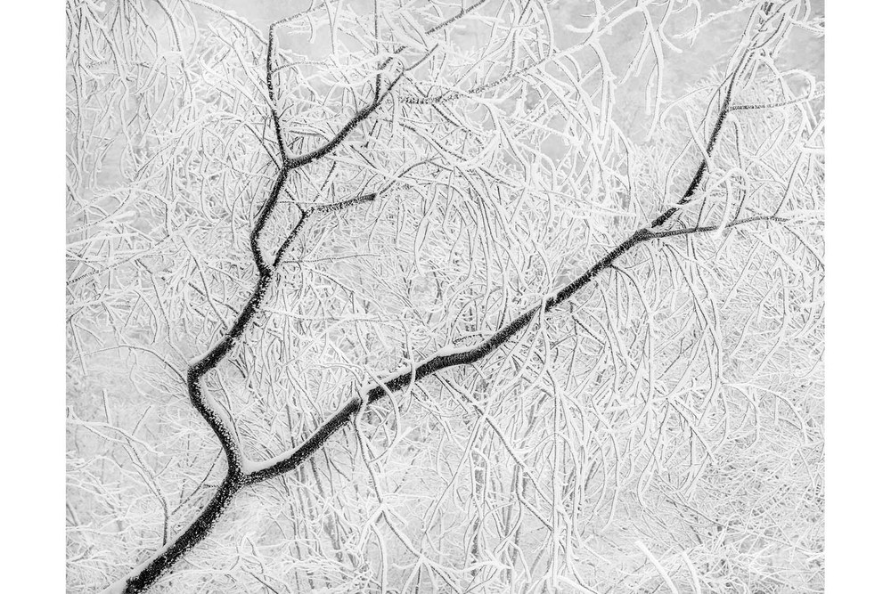 March 2011 POM Tree Branches Snow Ice 4x6.jpg