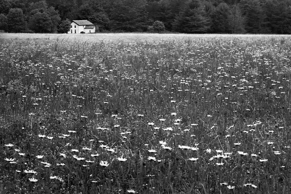 May 2011 POM Cades Cove 4x6.jpg