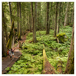 Walking / Sightseeing In an old growth forest, it's easy to be humble. Valhalla Park, Kokanee Glacier Provincial Park and Cedar Grove Trail are three of many walking trails along the West Koot Route that will give you some epic perspective.
