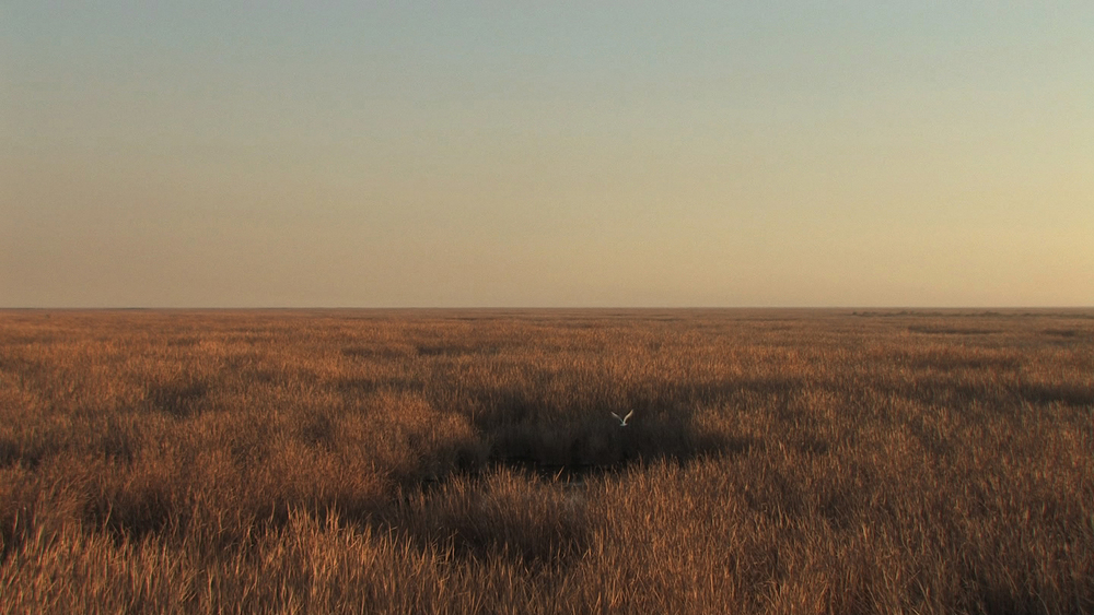 Still from Three Transnational Wetlands (La Cienega de Santa Clara), 2012, single-channel color video, running time: 2.5 minutes.