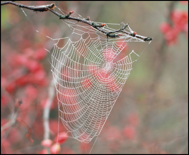 Cobweb / Science