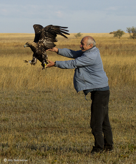 Dr. Bragin releasing the adult male Imperial eagle