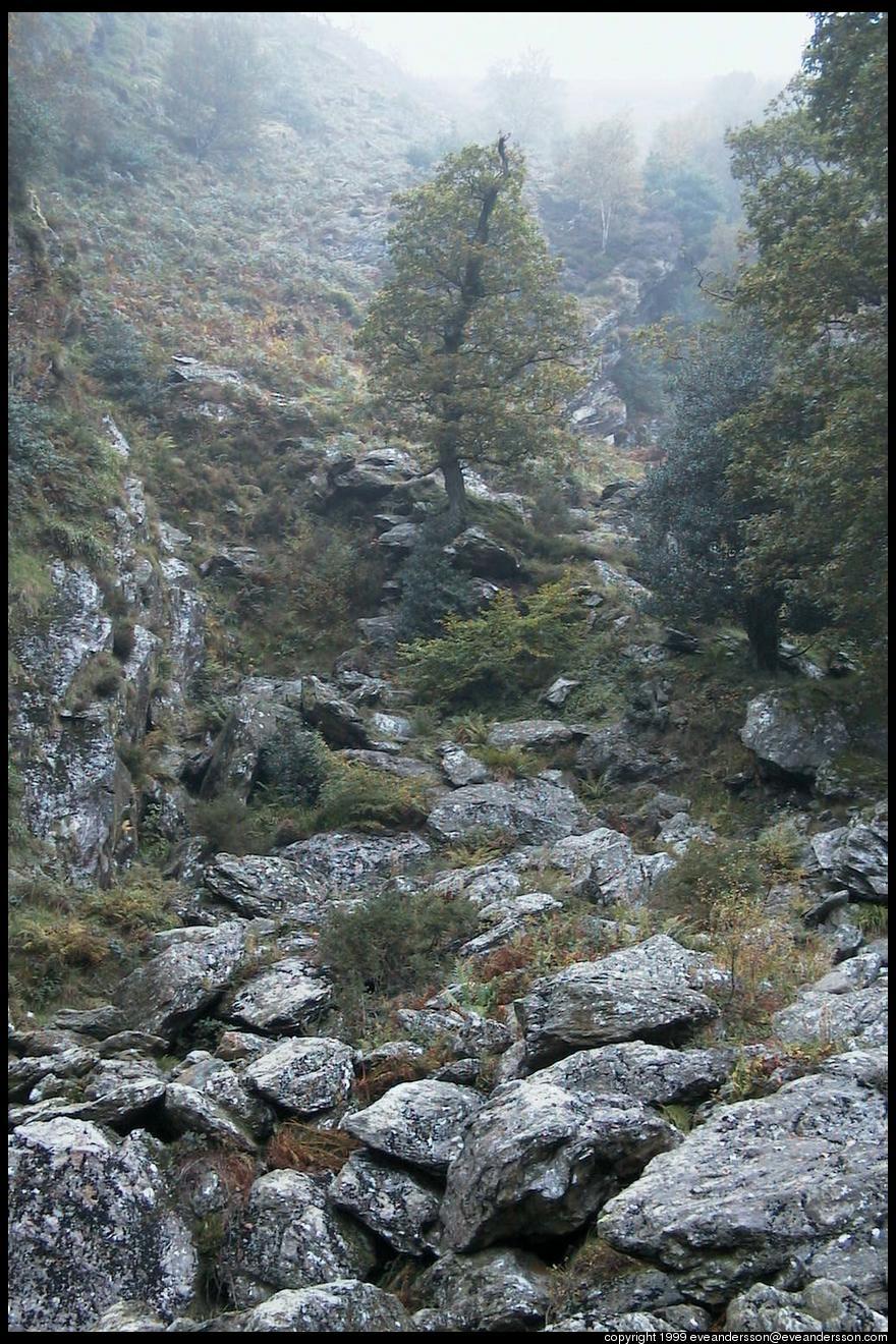 1239-wicklow-rocks-and-trees-medium.jpg