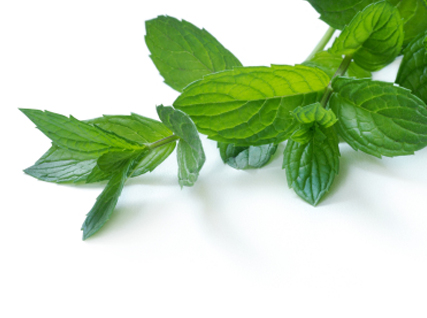 Mint  is a natural stimulant, and the smell alone can be enough to charge your batteries and get your brain functioning on a high level again. soothes skin, it also helps to cure infections and itchiness.