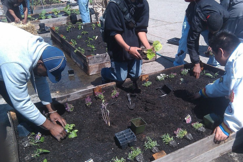 With A Little Help: McClymonds Freshmen Plant School's First Vegetable Garden