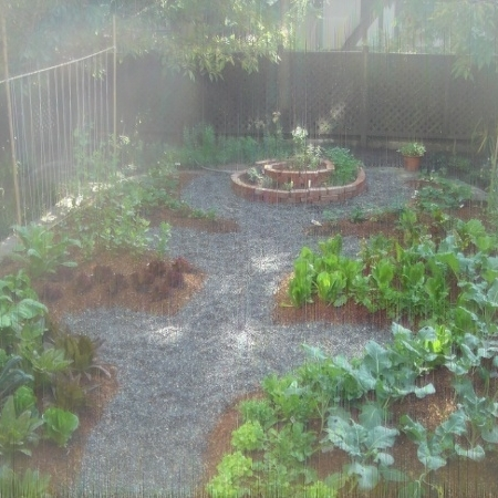 large_doves garden 1 month later (1).JPG