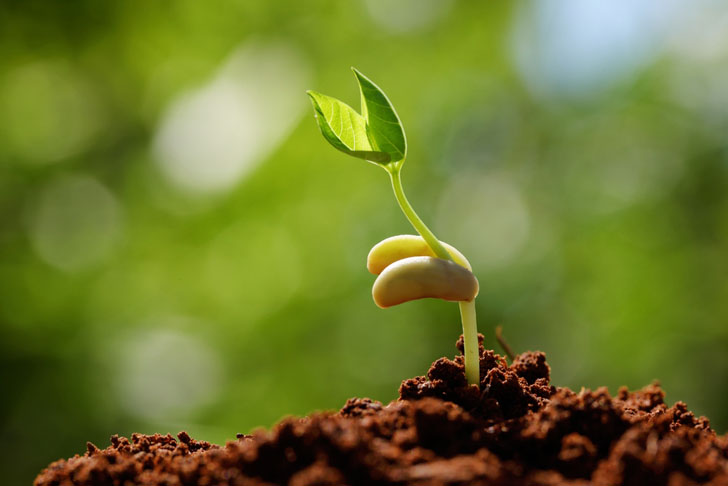 Seedling sprouting in garden