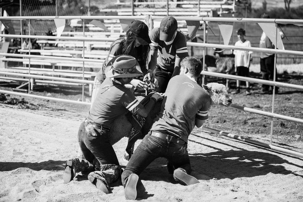 bandana-roundup-at-legacy-days-rodeo-heber-ut