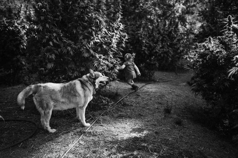 candid-black-and-white-photo-of-girl-running-from-wolf-dog-in-weed-farm-san-francisco-california