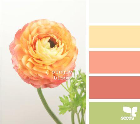 www.seeds.com