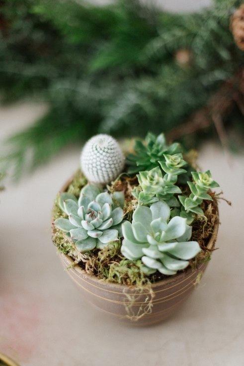 sophisticated floral designs modern christmas succulent centerpiece planter Liza James Photography (1) (491x736) (491x736).jpg