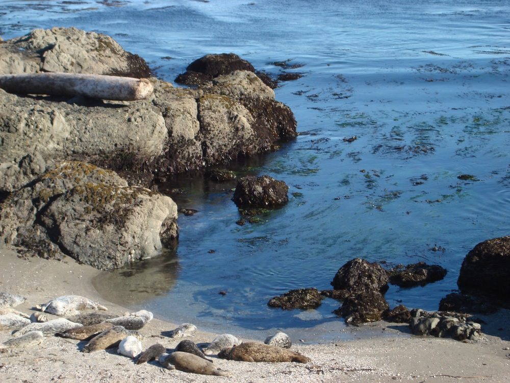 Shell Beach (15 min N from Casa Pacis): reserved breeding place for harbor seals
