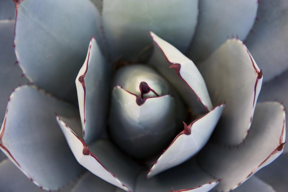 Arizona-2017-15.jpg