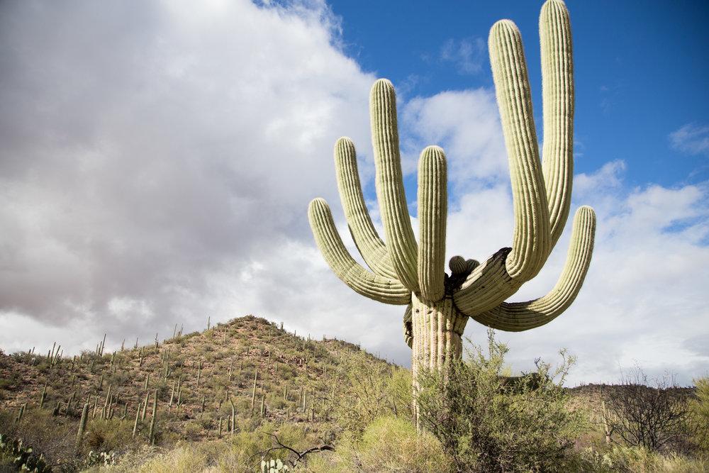Arizona-2017-61.jpg