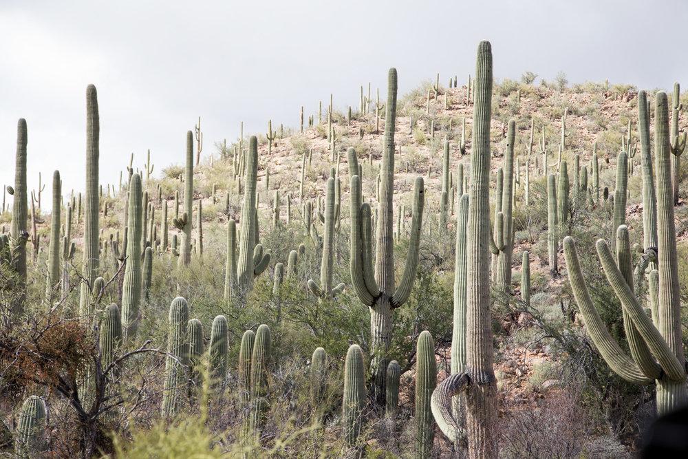 Arizona-2017-66.jpg