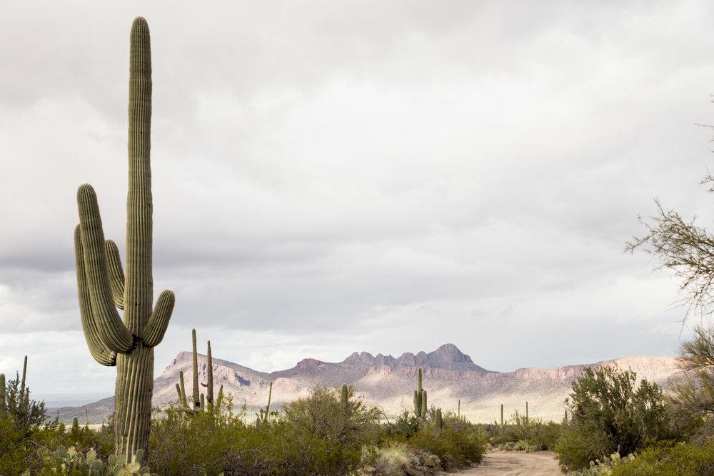 Arizona-2017-72.jpg