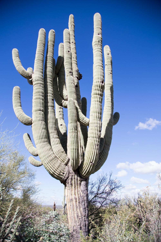 Arizona-2017-128.jpg