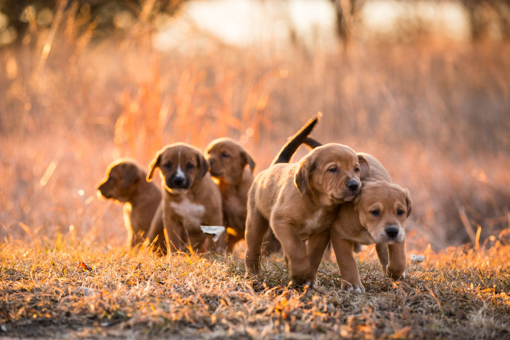 Puppies-blog-16.jpg