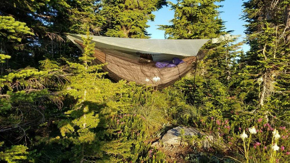 Hammock setup. Dispersed camping.