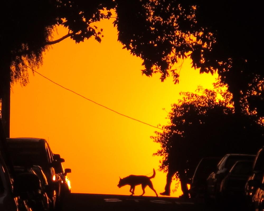 Sunrise Tug
