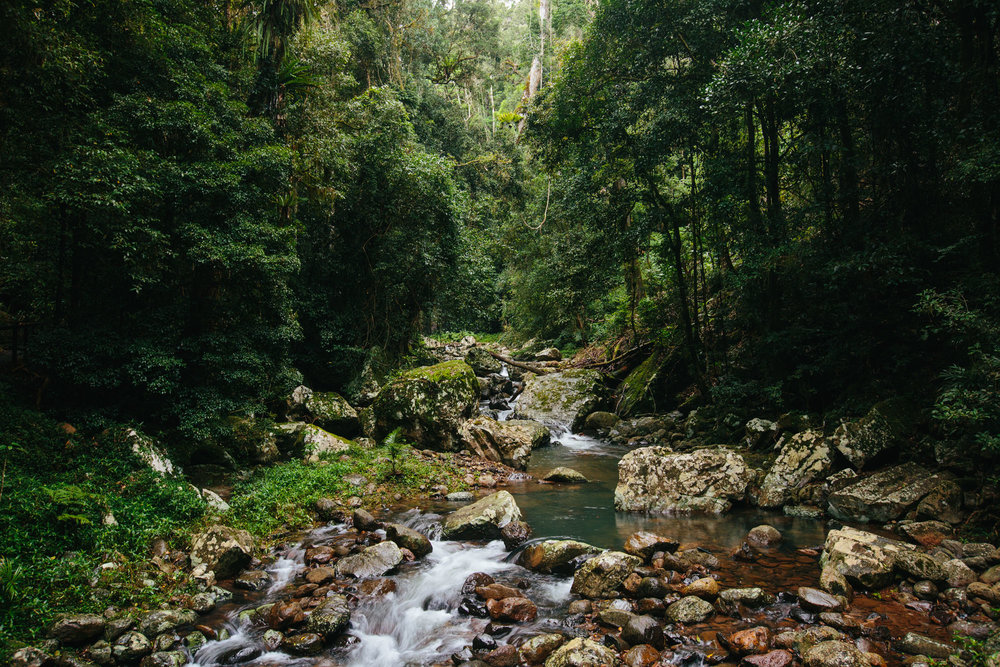 Springbrook National Park_2.jpg