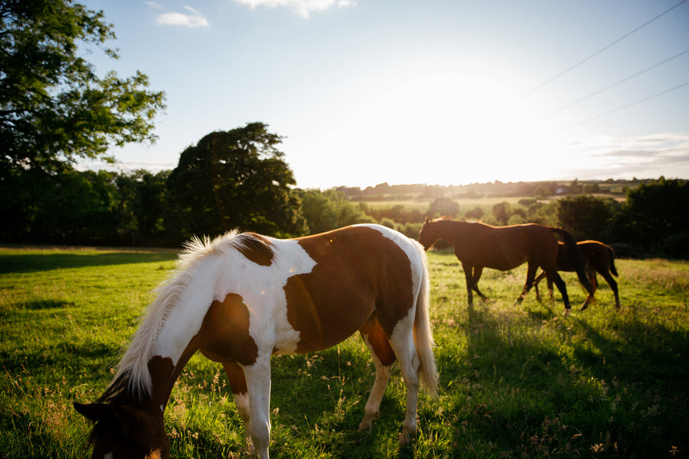 clairebyrnephotography-wedding-photography-ireland-engagement-sunset-farm-horses-37.jpg