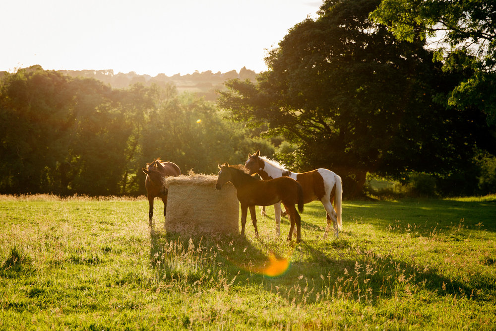 clairebyrnephotography-wedding-photography-ireland-engagement-sunset-farm-horses-39.jpg