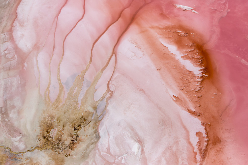 Sel Rose 1