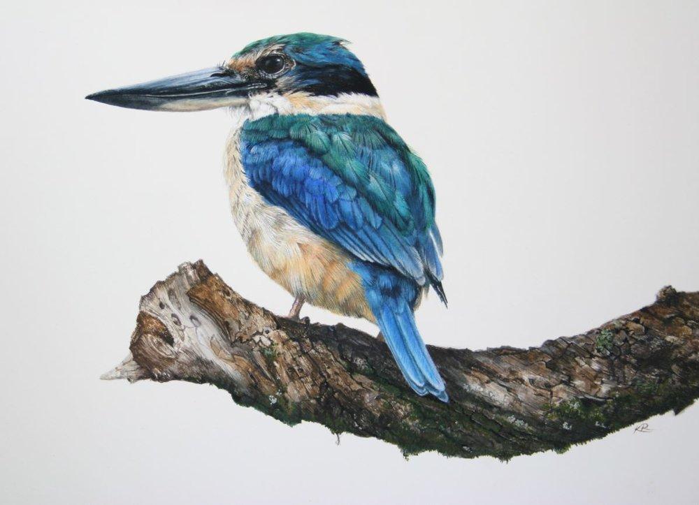 Title: Sacred Kingfisher