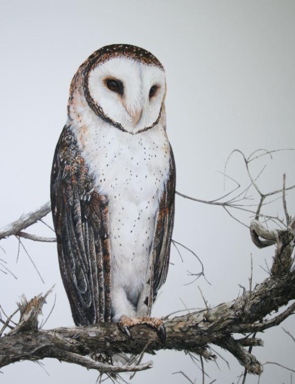 Title: Barn Owl