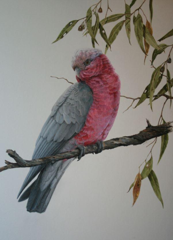 Title: Pink Galah