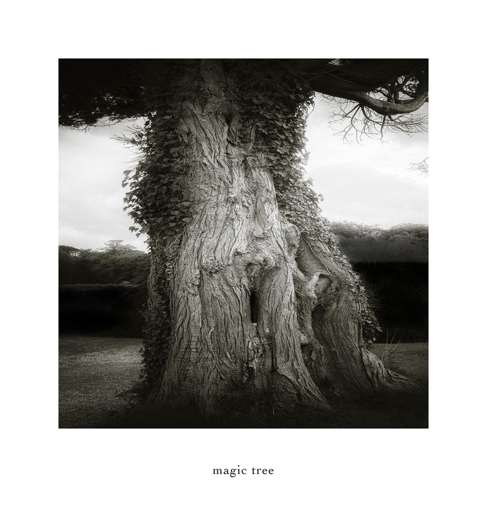 """magic tree"""