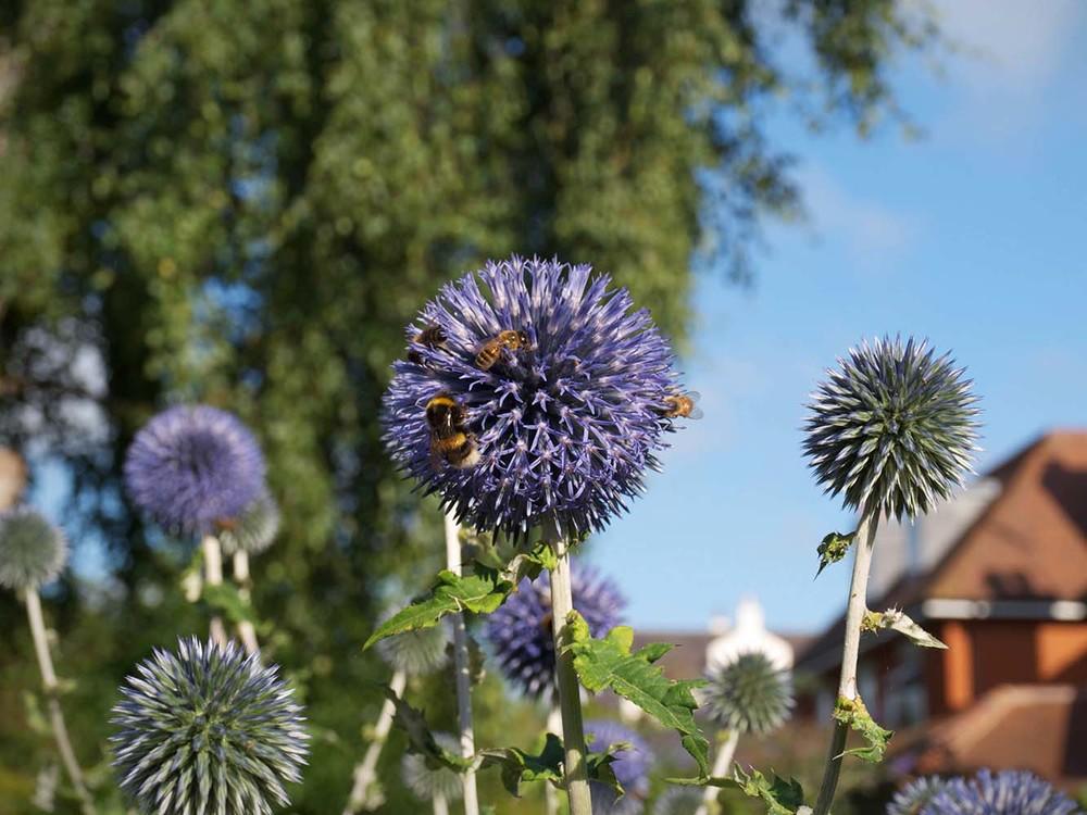 Feverfew_Garden_Design_005.jpg