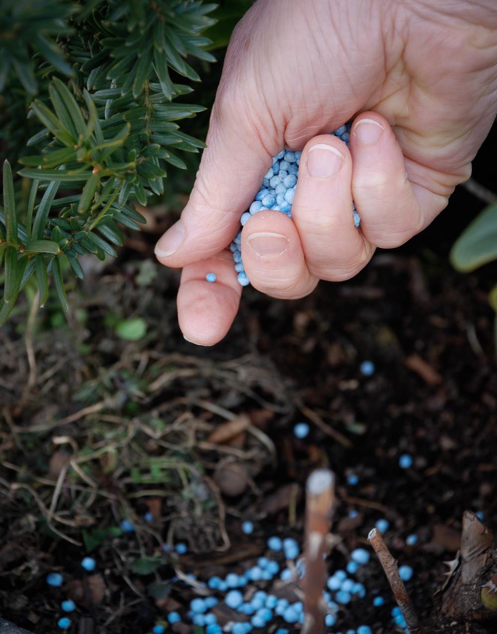 Blåkorn  er en type kunstgjødsel som blandes inn i jorda. Som all type gjødsel må du være nøye med doseringen og med å fordele gjødselen godt utover. Ellers brenner du røttene.