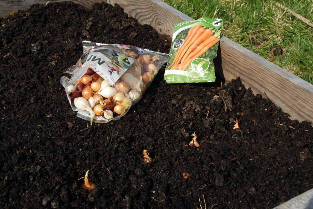 I store deler av landet er jorda nå klar for både setteløk, poteter og gulrøtter.