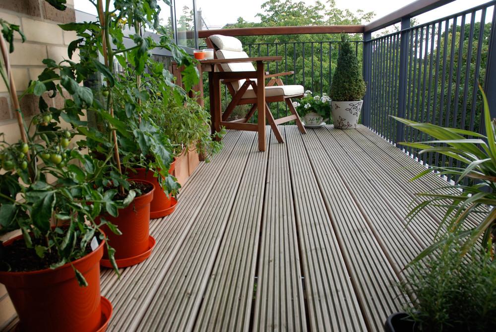 Dette bildet er tatt i England. Det å dyrke tomater utendørs i Norge er risikosport.Er du sulten har du tomatplantene i et drivhus hele tiden.